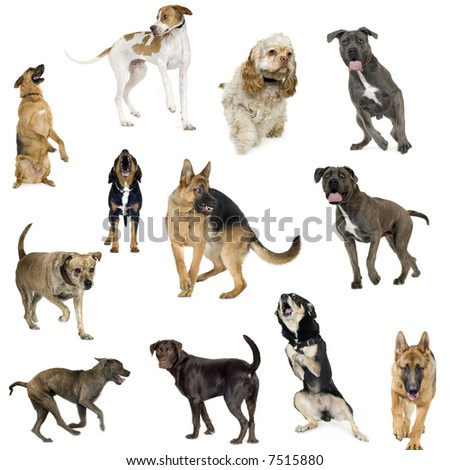 Collection of 12 dogs of different sizes and in different positions in front of a white background