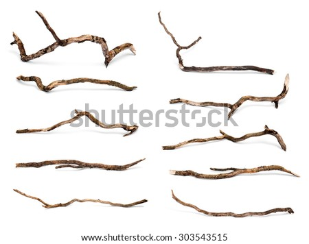 Collection of dry twigs isolated on white background.