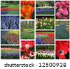 Collection of Dutch flora - stock photo