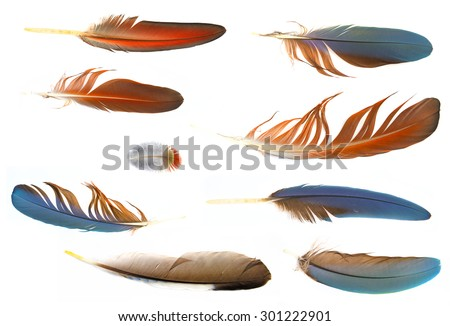 collection of feathers - stock photo