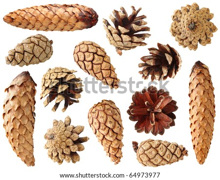 Collection of fir and pine cones isolated on white - stock photo
