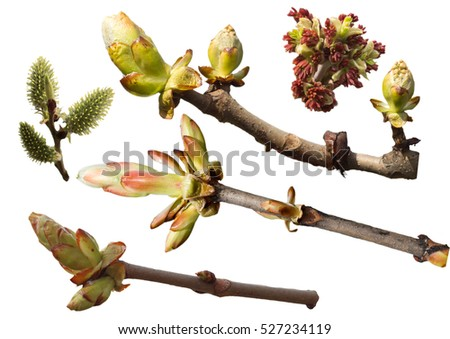 Collection of flowering branches with spring buds on a white background
