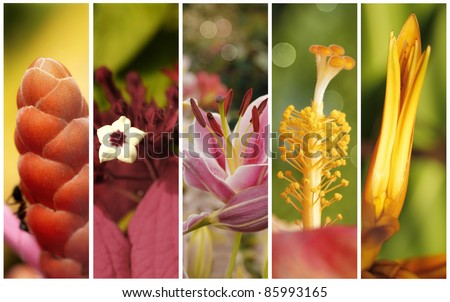 Collection of flowers close up with shallow depth of field - stock photo