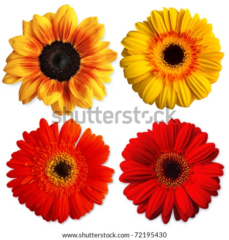 Collection of flowers for card wishes - stock photo