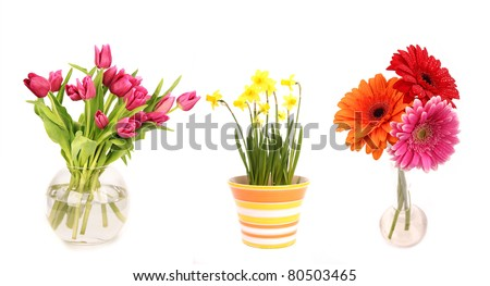 Collection of flowers in vases, isolated on white background