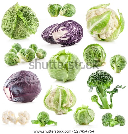 Collection of fresh cabbage, isolated on white background