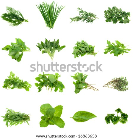 Collection of fresh herbs, isolated on white. XXL file. Please see individual images in my gallery - stock photo