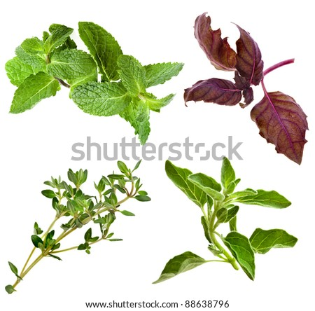Collection of fresh herbs mint basil  thyme isolated on white - stock photo
