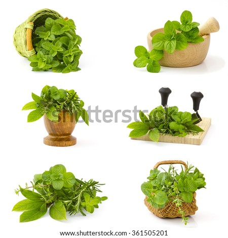 collection of freshly harvested herbs on white background - stock photo