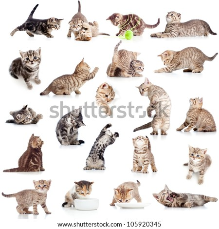 collection of funny playful cat kitten isolated on white background - stock photo
