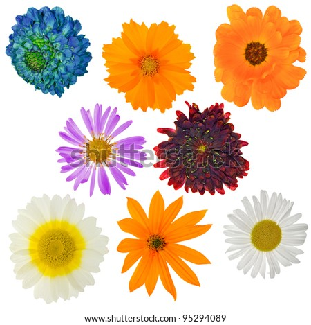 collection of garden flowers isolated on white background - stock photo