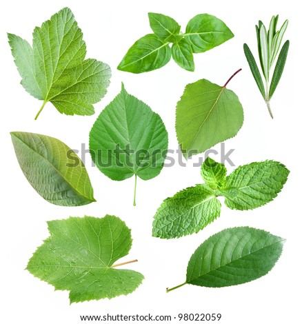 Collection of garden leaves on white background - stock photo