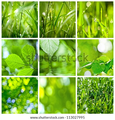 collection of green grass and leaves. Spring backgrounds - stock photo