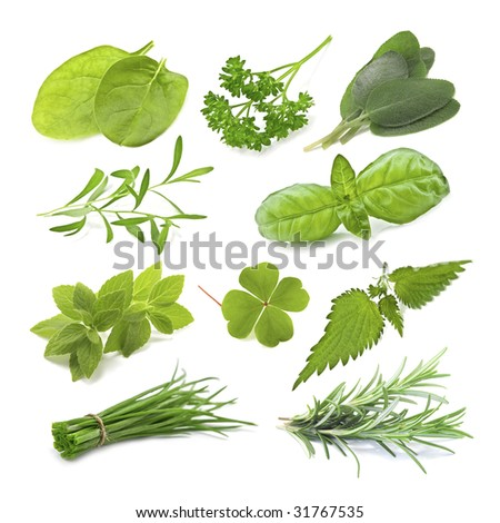 collection of green herb isolated - stock photo