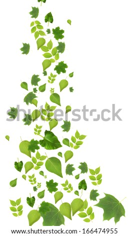 Collection of green leaves isolated on white - stock photo