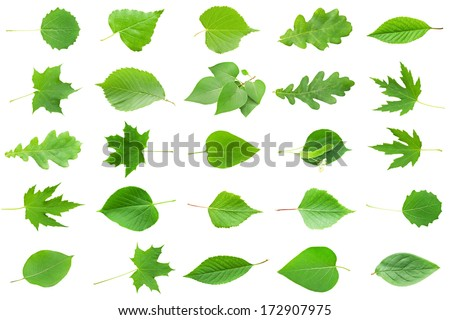 Collection of Green Leaves isolated on white background - stock photo