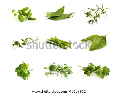 Collection of herbs - stock photo