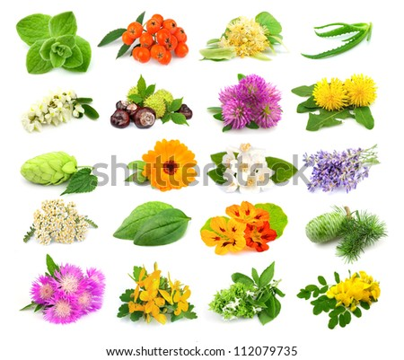 Collection of herbs and flowers on white - stock photo