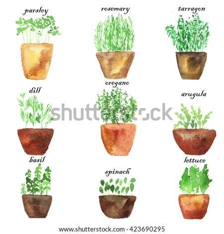 Collection of herbs. Watercolor set. Herbs in clay pots. Green, brown. - stock photo