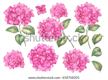 collection of hydrangea flowers awesome pink flowers collection pack for marriage wedding or