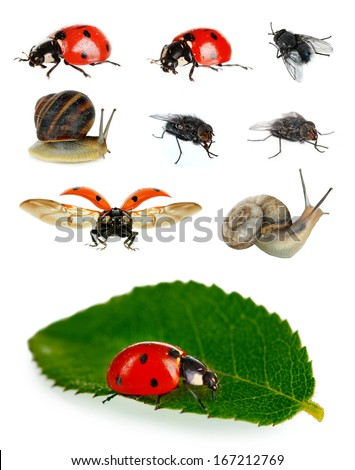 Collection of insects isolated on white - stock photo