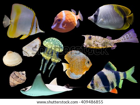Collection of isolated fish and shells on black background - stock photo