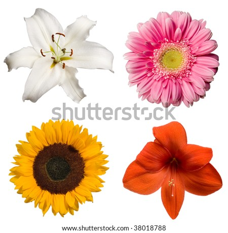 Collection of isolated flowers - stock photo