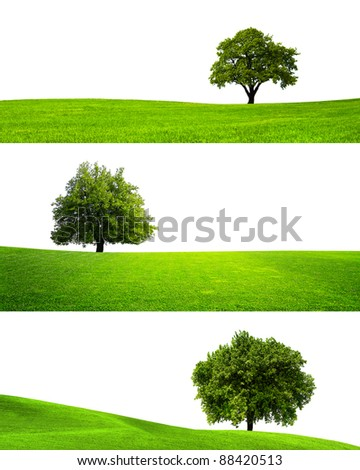 Collection of isolated green tree