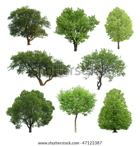 collection of isolated summer tree - stock photo