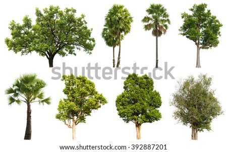 Collection of isolated tree and coconut palm tree on white background - stock photo