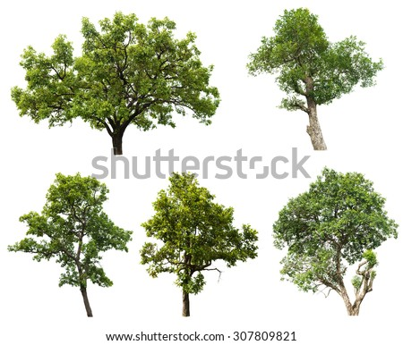 Collection of isolated tree on white background - stock photo