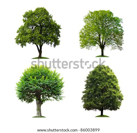 collection of isolated trees - stock photo