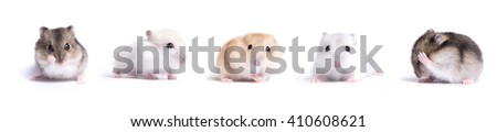 collection of Jungar hamster on a white background - stock photo