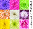 Collection of Nine Chrysanthemum Flower Macros. Nine Square Close-ups of Multi Colored Flowers. High Quality - stock photo