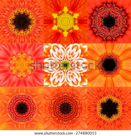 Collection of Nine Orange Concentric Flower Mandalas. Kaleidoscope Concentric design. Full Flower Background - stock photo