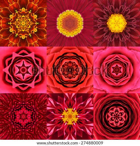 Collection of Nine Red Concentric Flower Mandalas. Kaleidoscope design. Full Flower Background - stock photo