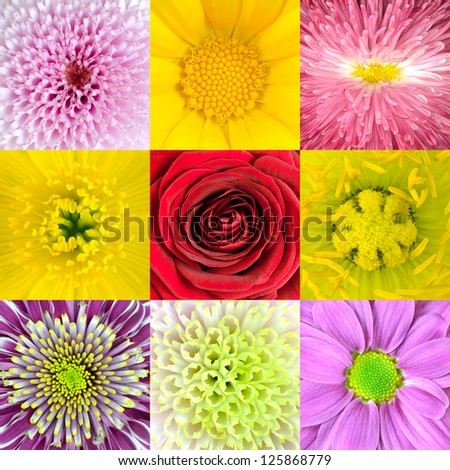 Collection of Nine Various Flowers Macros including Rose, Daisy, Osteospermum, Chrysanthemum, Marigold and other Wild Flowers