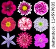 Collection of Nine Various Pink, Purple, Red Flowers Isolated on Black Background. Selection of Nine Periwinkle, Rose, CornFlower, Lily, Daisy, Chrysanthemum, Dahlia, Carnation, Primrose Flowers - stock photo