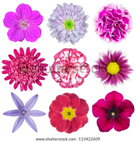 Collection of Nine Various Pink, Purple, Red Flowers Isolated on White Background. Selection of Nine Periwinkle, Rose, CornFlower, Lily, Daisy, Chrysanthemum, Dahlia, Carnation, Primrose Flowers - stock photo