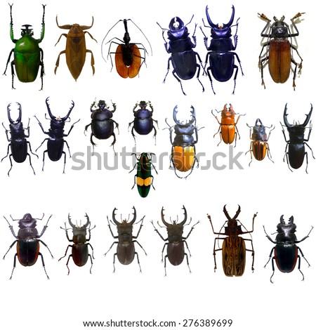 collection of odontolabis mouhotii parry beetle bug isolated on white - stock photo