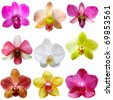 Collection of orchid flower isolated on white - stock photo