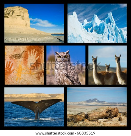 Collection of Patagonia images, showing wildlife and landscapes, petrified woods, cave paintings. - stock photo
