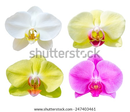 Collection of Phalaenopsis orchid flower isolated on white bakcground, clipping path. - stock photo