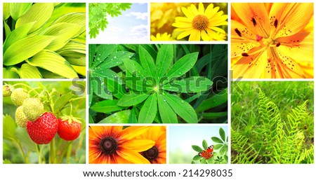 Collection of photos with summer flowers, green leaves and butterfly