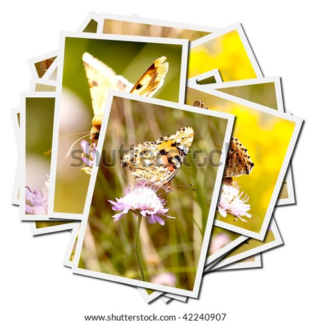 Collection of pictures of butterflies on a flower