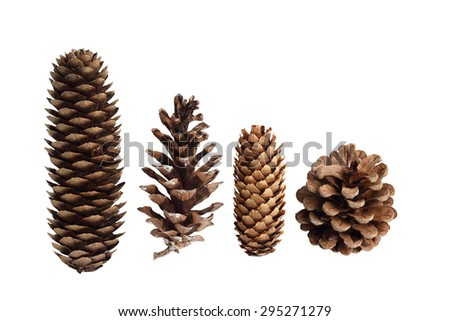 Collection of pine cones isolated on white background - stock photo
