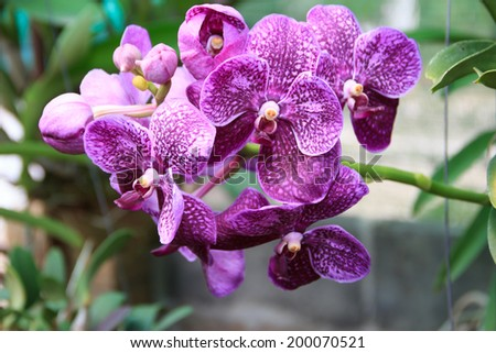 Collection of Pink Orchids