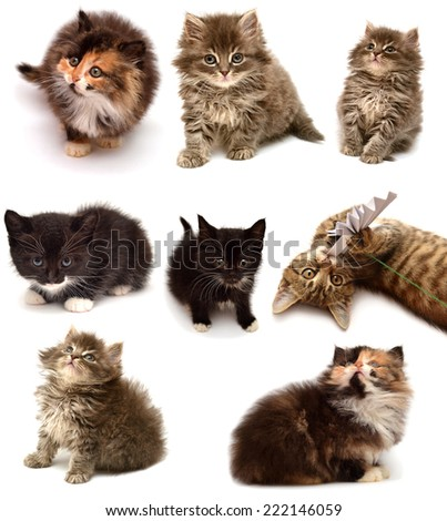Collection of playful kittens of different breeds isolated on white background - stock photo