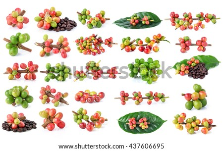 Collection of Red coffee beans on a branch of coffee tree, ripe and unripe berries isolated on white background - stock photo