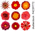 Collection of Red Flowers Isolated on White Background. Set of Nine Zinnia, Primrose, Strawflower, Rose, Carnation, Dahlia, Perenial Daisy Flowers - stock photo